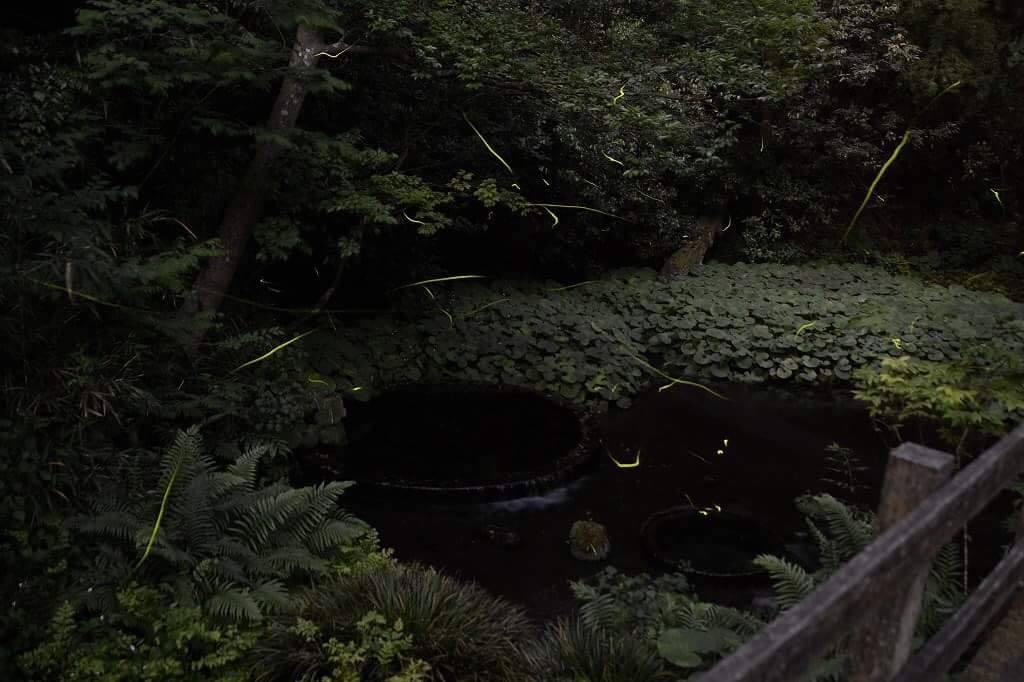 柿田川公園内の船着場でホタルが見えました!